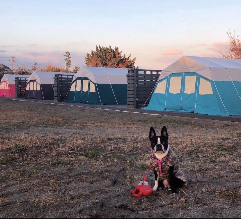 1日2組限定!愛犬と一緒にテントに宿泊できるプラン